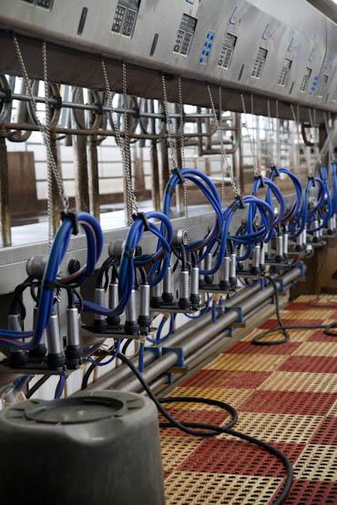 NYS Dairy Tour-2